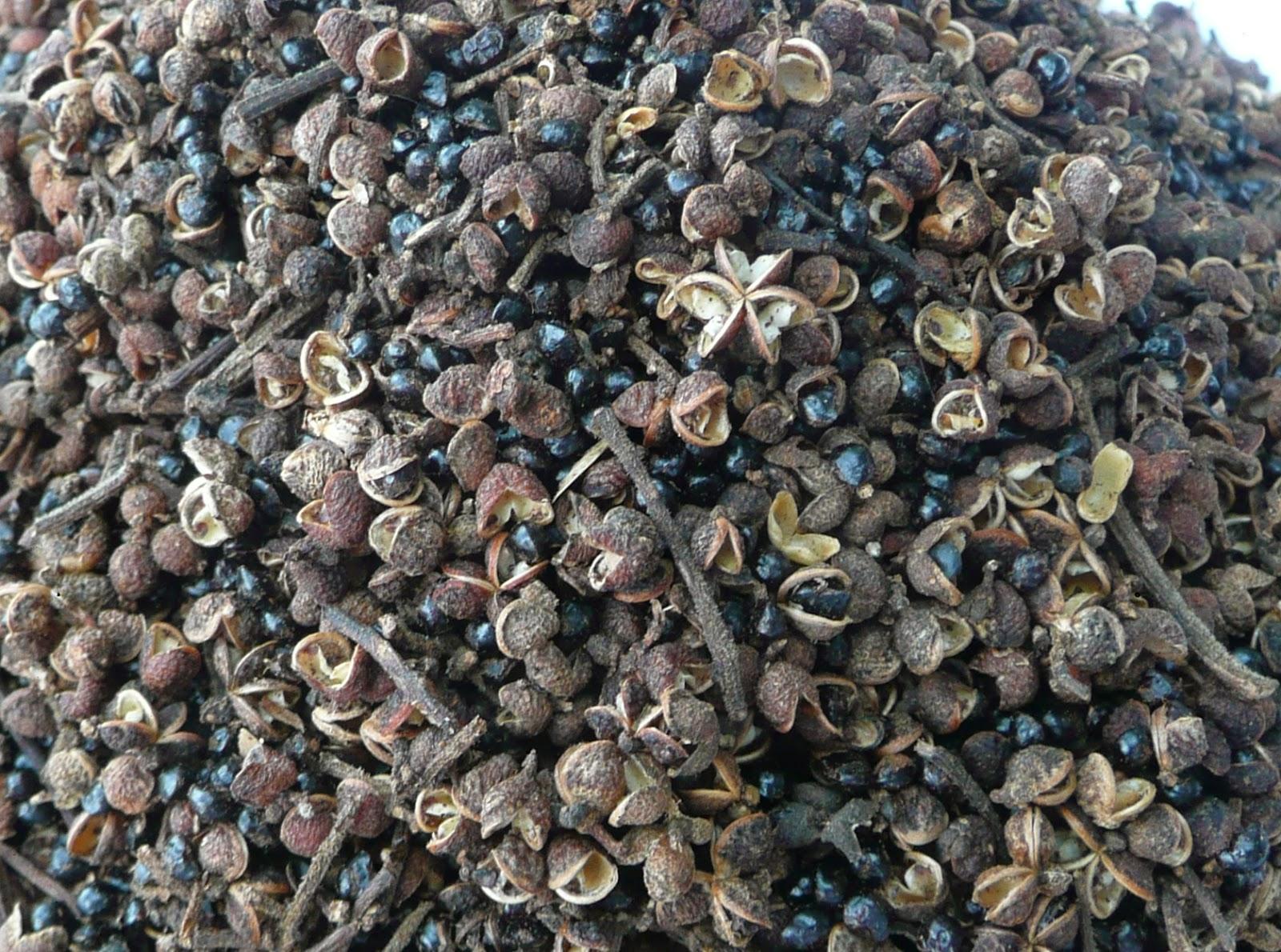 Hạt mắc khén là một loại gia vị đặc trưng cảu vùng núi tây bắc được người dân ở đây thường xuyên sử dụng để tẩm ướp các món ăn