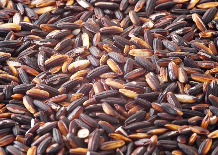 Gạo nếp cẩm thực phẩm dinh dưỡng cho cả nhà